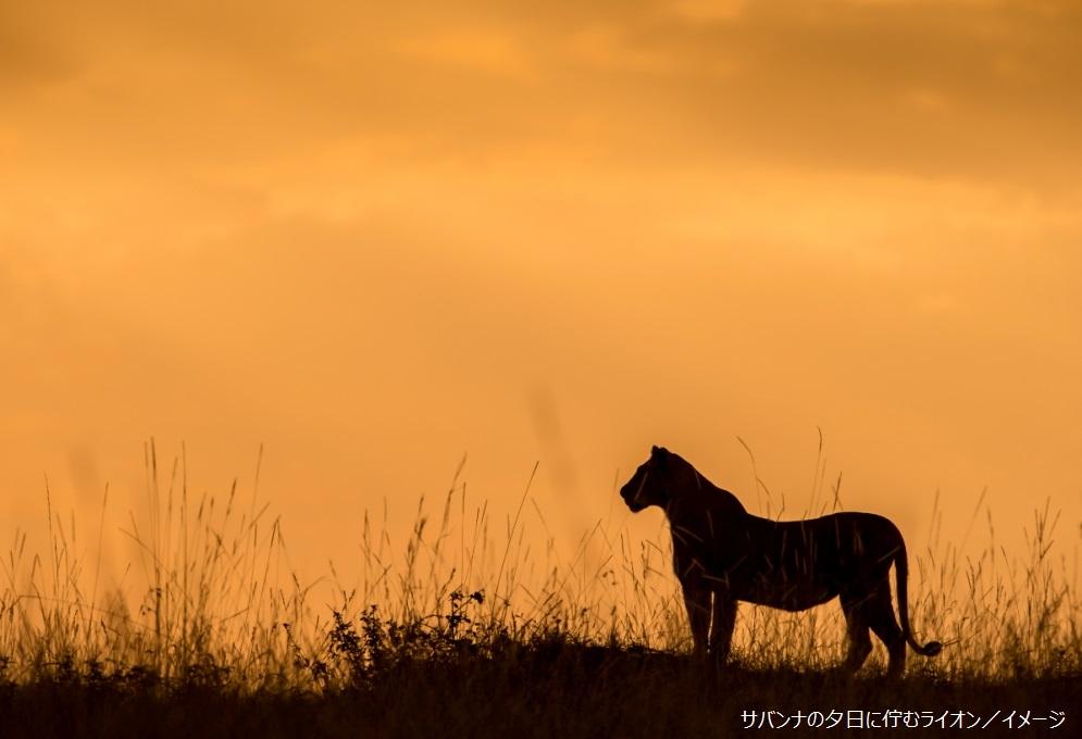 ~ケニア4大公園周遊!!アンボセリ・アバーディア・ナクル湖・マサイマラ☆日本語係員同行で~ケニアワイルドサファリ 9日間<カード決済OK!>