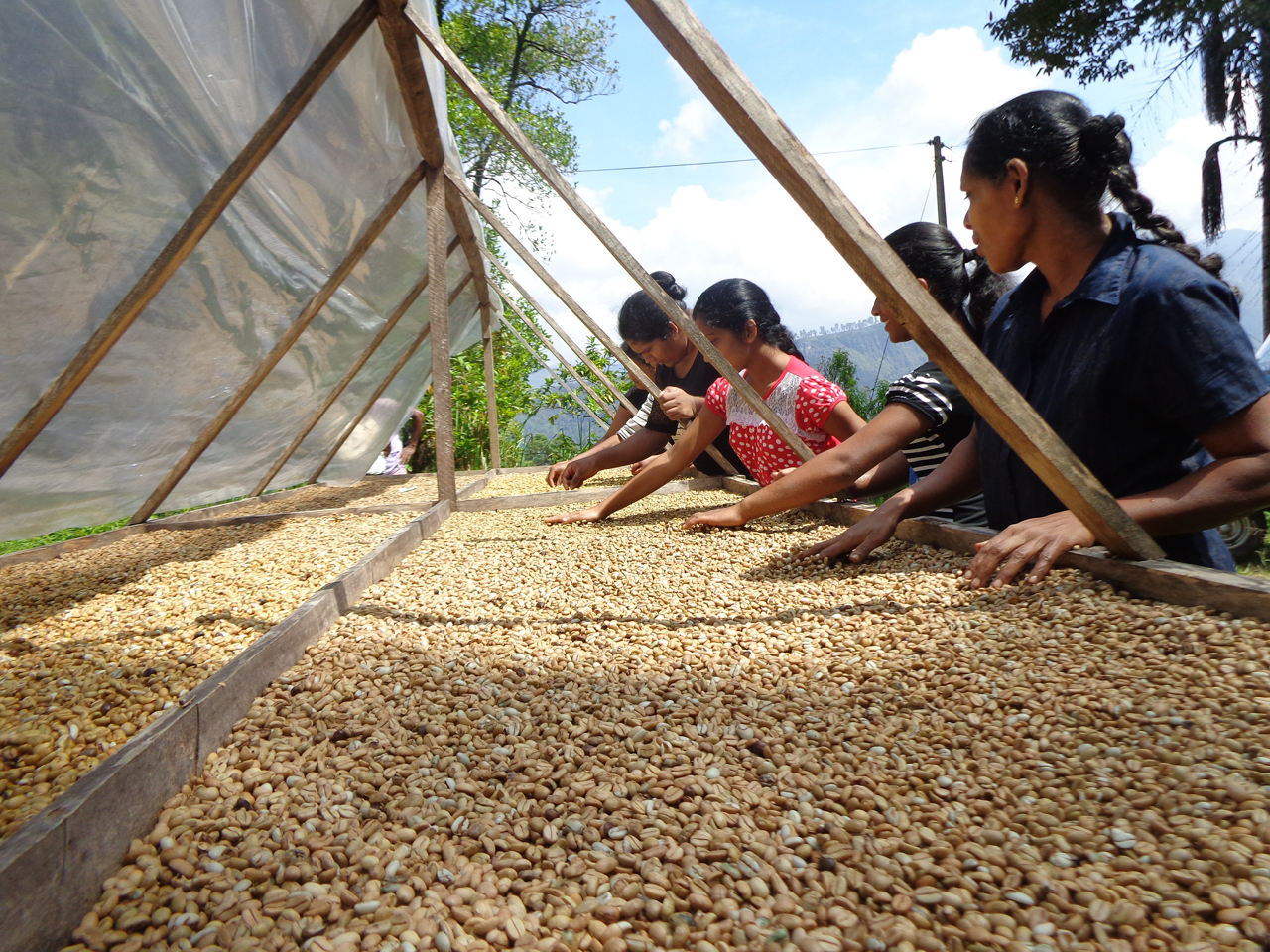 【特別企画】スリランカ航空で行く『Natural Coffee』×『スリランカ案内人うっちゃん』コラボプロデュースツアー「セイロンコーヒーを巡る旅」6日間(4泊6日)
